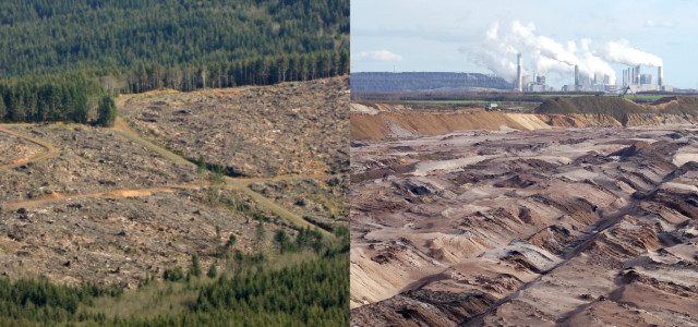 clearcutting vs. strip mine