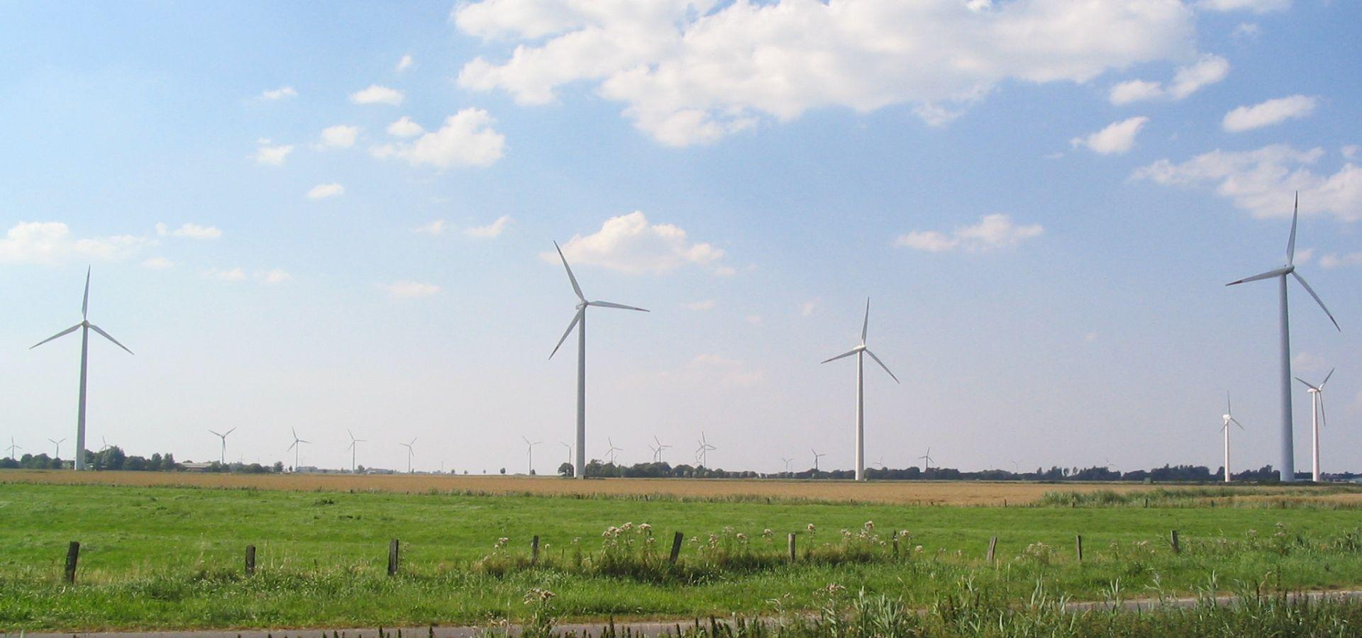 Windräder auf einer Wiese