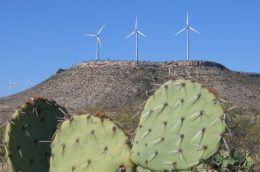 There's a cactus in the foreground and windmills on desert hills in the background.