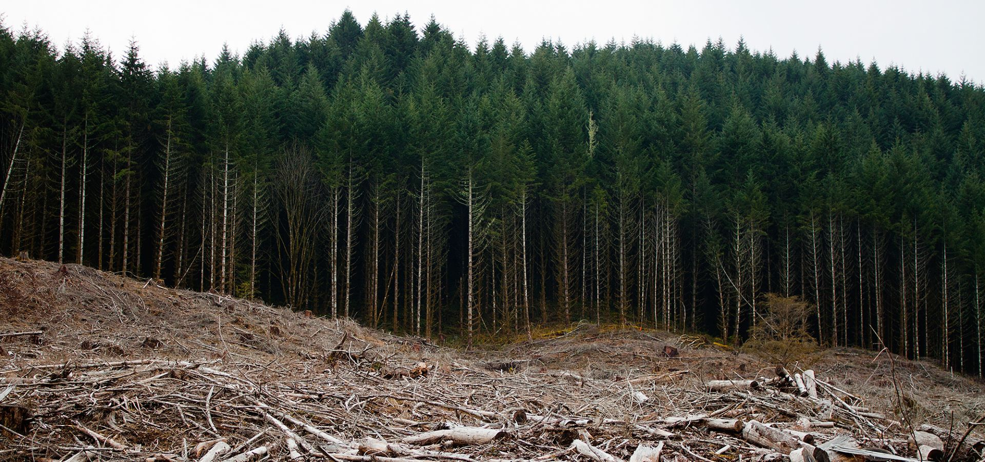 Clear-cut forests in Oregon