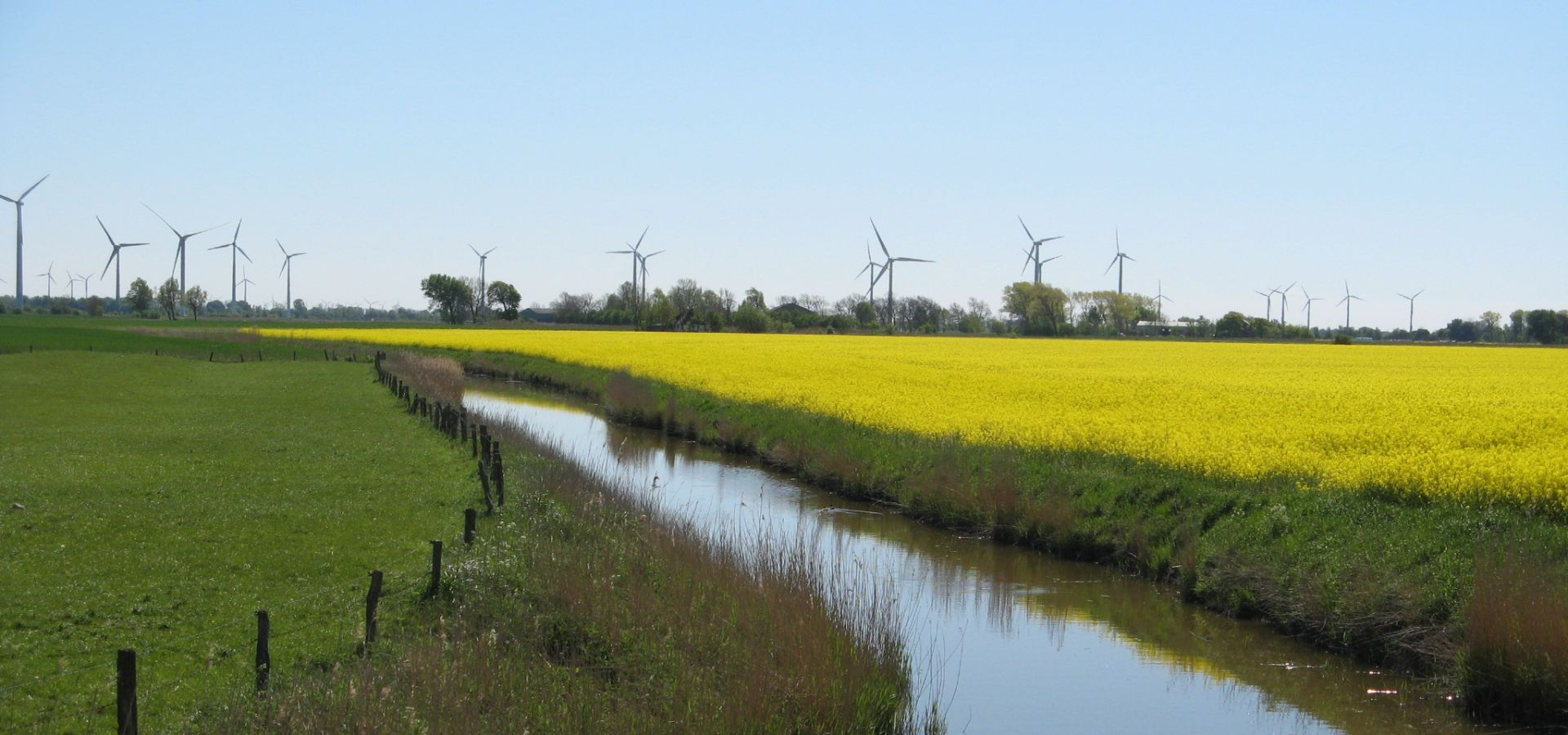 an animal enclosure separated from a rapeseed field by a small river, with wind turbines on the horizon