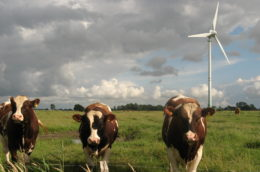 Three cows standing at a fence with a wind turbine in the background