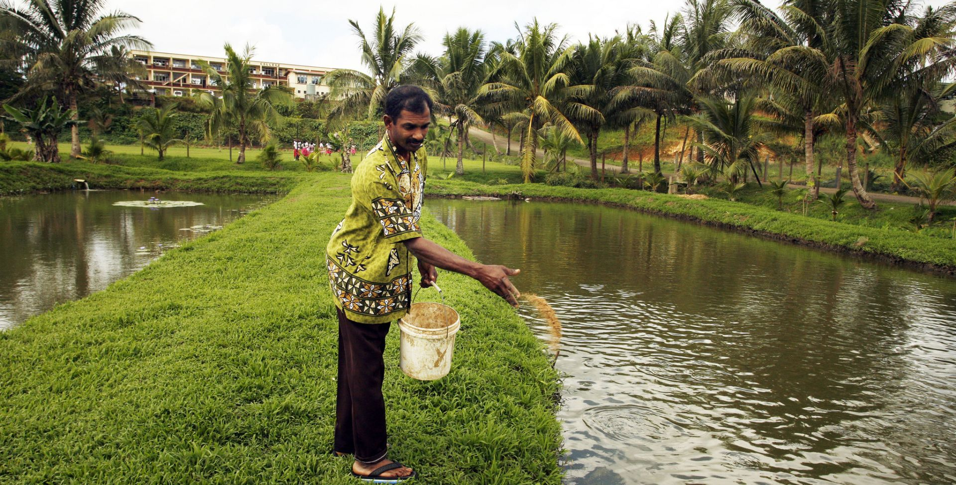 A man standing in a canal area throwing fish food into the water, behind him are palm trees