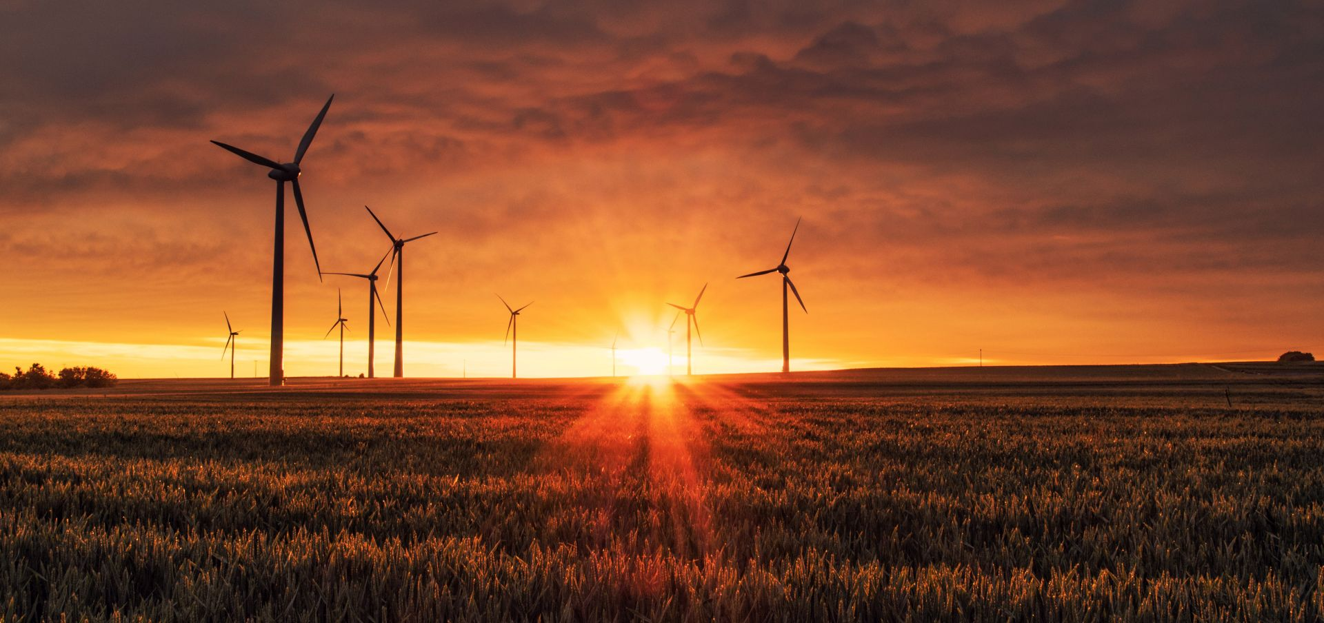 wind turbines in a field of wheat with sunset behind