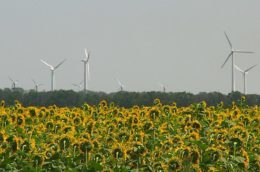windmills behind a field of sunflowers