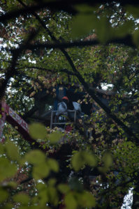 Police are clearing the tree houses of the environmentalists