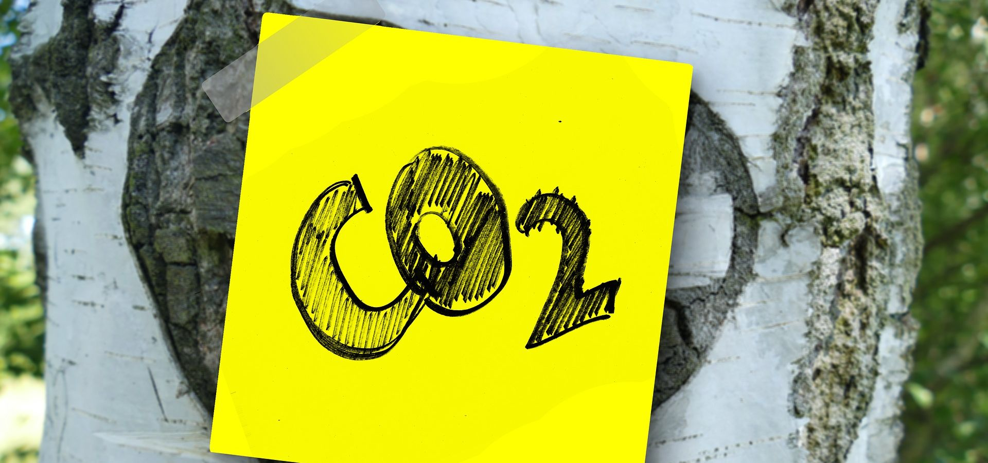 It is important to keep the political economy of international carbon markets in mind