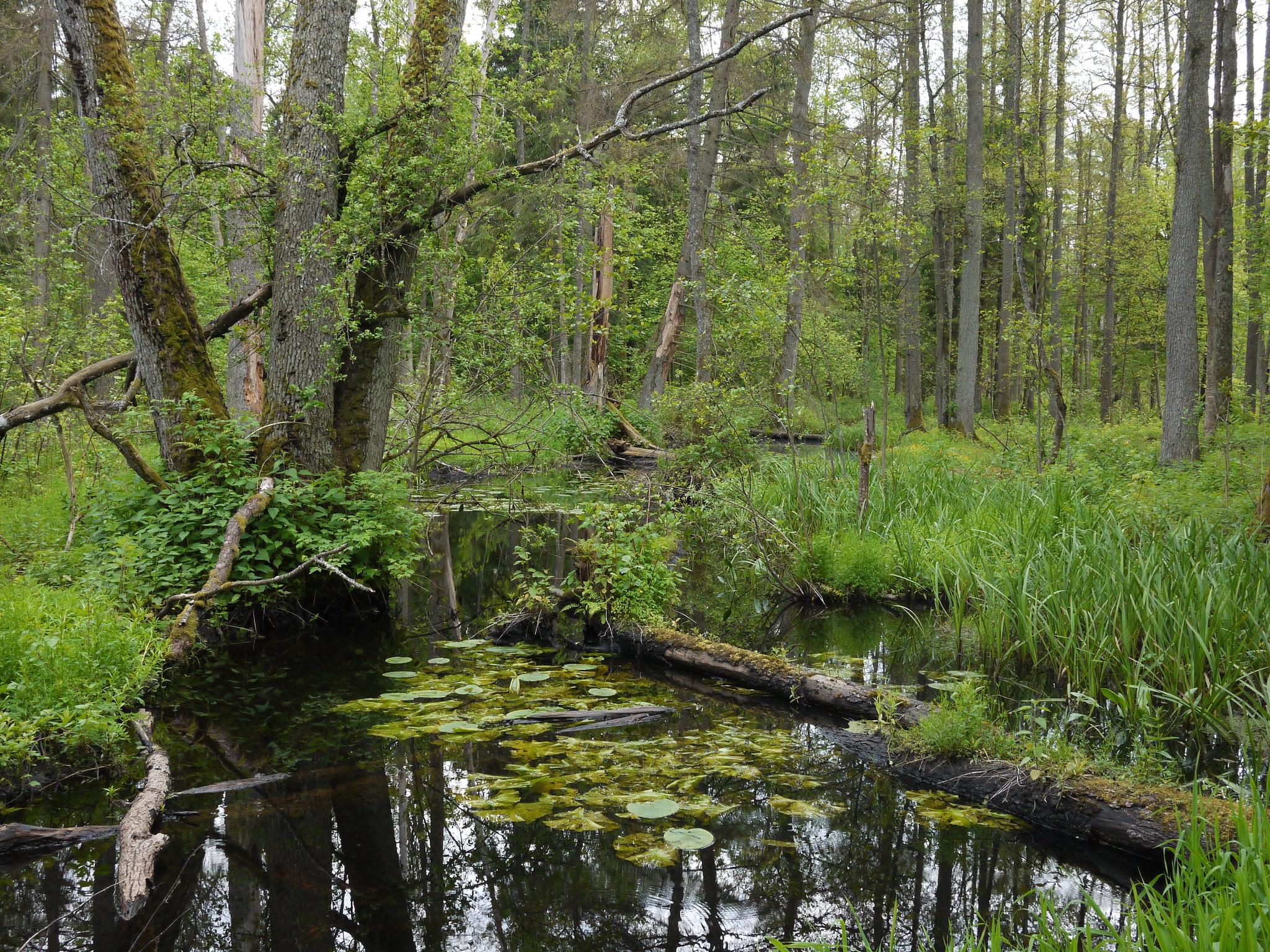 Białowieża National Park in Poland